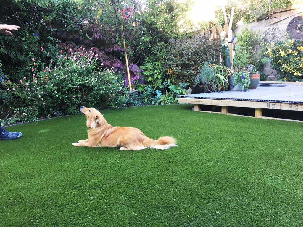 Pet Friendly Artificial Grass Garden